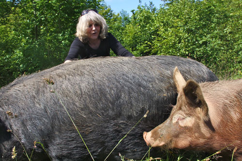 Judy Scrimshaw aka Granny Moff the author of The Ballad of Morgowr with her pigs in Cornwall